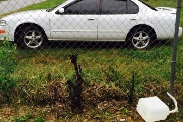 Nissan Altima 1999